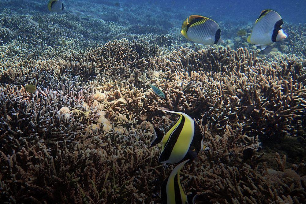 Snorkeling Lembongan